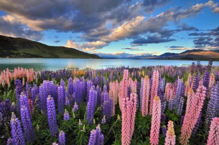 studiowanie w Nowej Zelandii